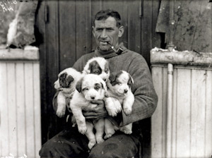 Tom Crean with puppies,on Endurance 1911