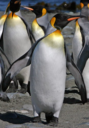 Animals in Antarctica - South Polar