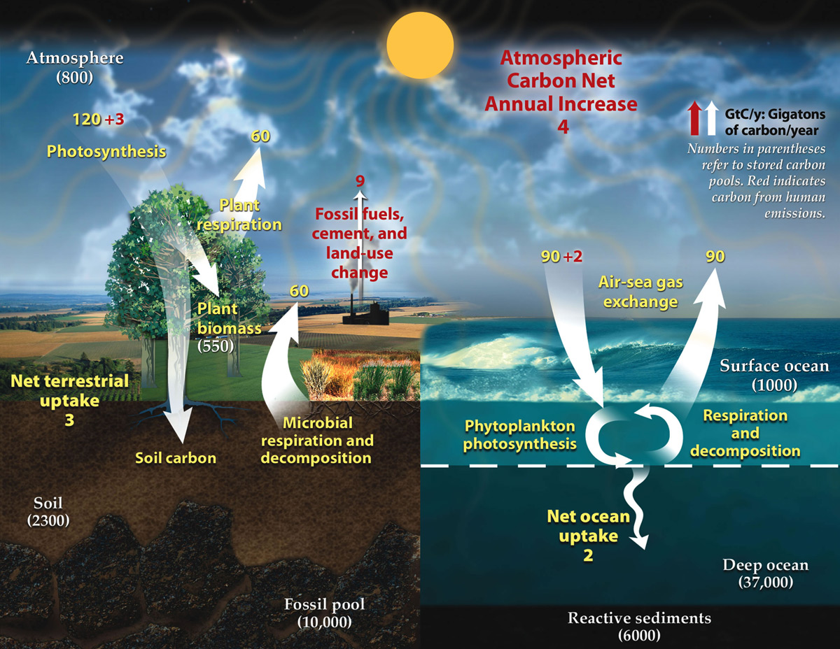 Carbon cycle ccuart Image collections