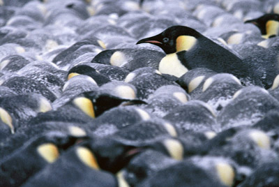 How animals survive extreme cold conditions