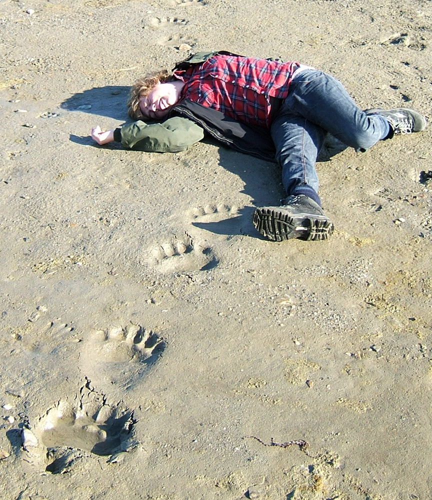 Do polar bears eat humans - photo#15
