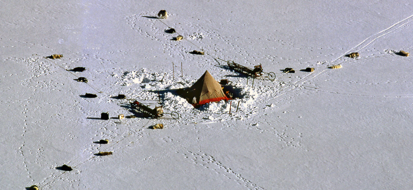 Two Dog Teams Each Pulling A Sledge Camps For The Night, Antarctica 1970's