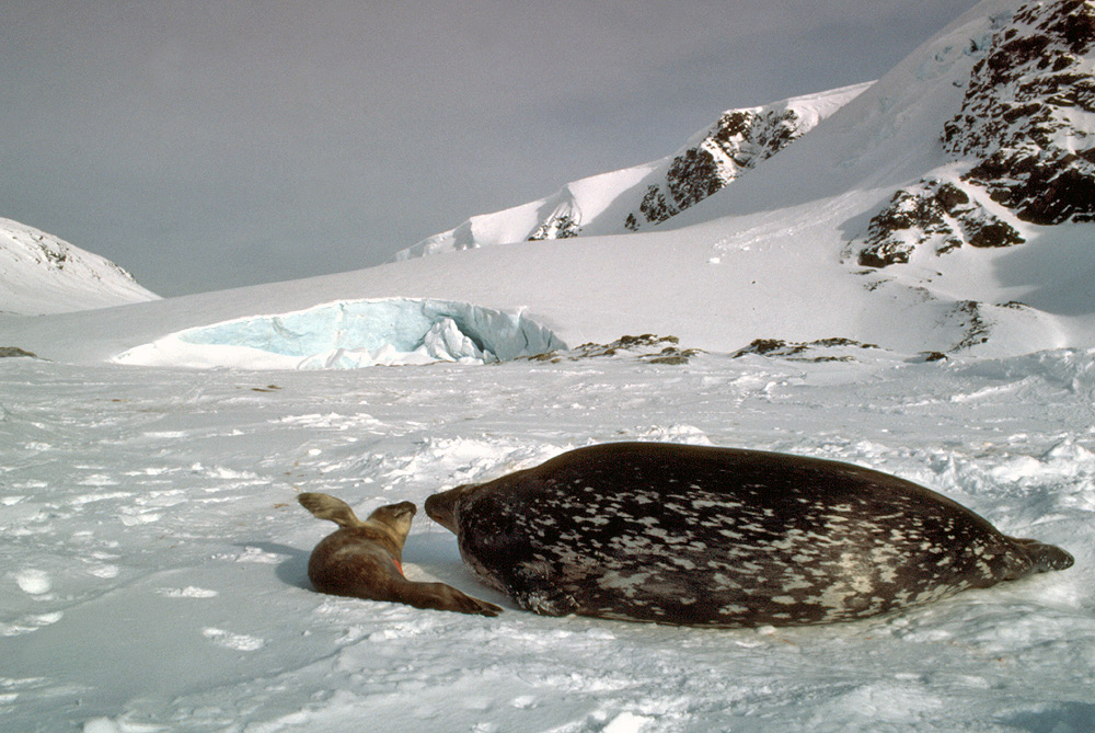 Antarctic Animal Adaptations - 12 things to see and do in antarctica