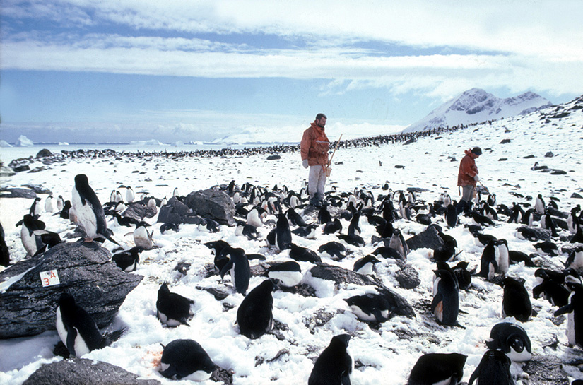 penguin survey