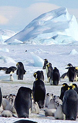 Ross Sea Antarctica